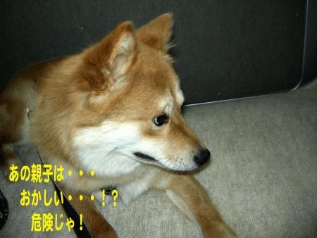 犬マーク6