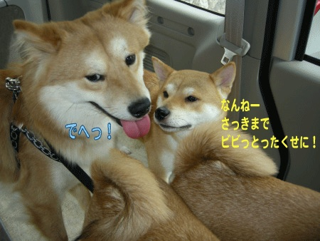 犬マーク9