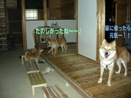 犬マーク11