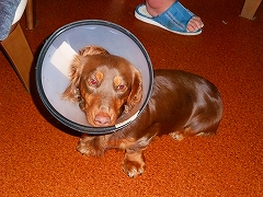パラボラ犬 Lucky