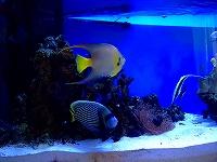 りかさん宅の海水魚