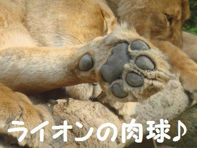 ライオンの肉球