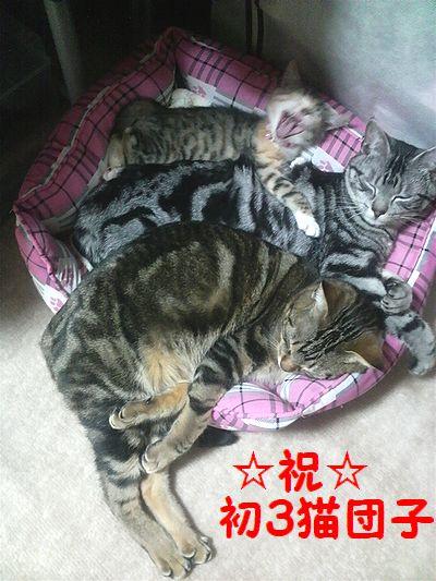 4初猫団子