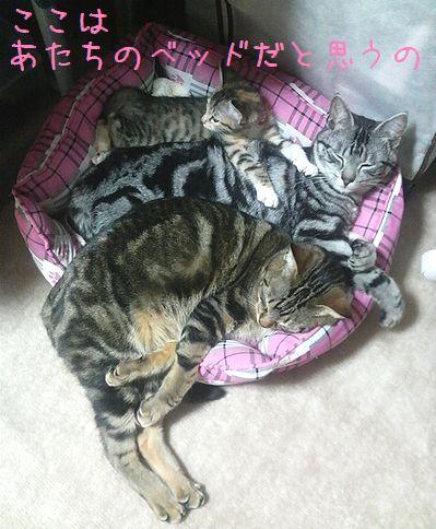 5あたちのベッド