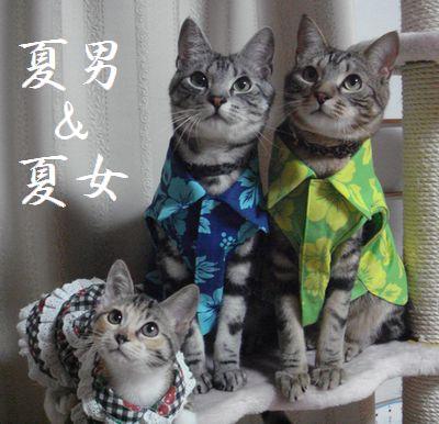 6夏男&夏女
