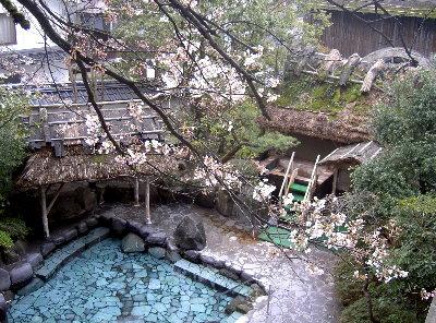 露天の桜4.1 001
