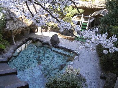 露天の桜4.6 003