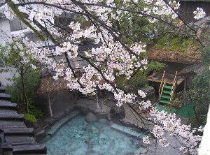 露天の桜4.7 001