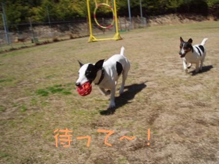 080315の大崎ドッグラン 057-as