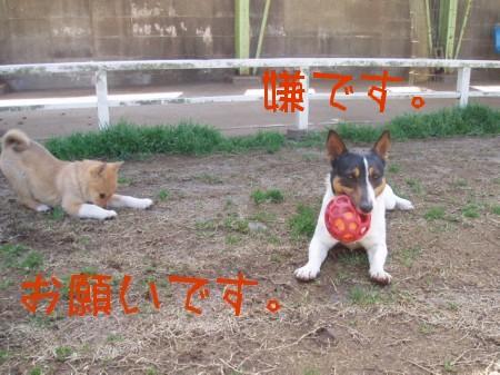 080315の大崎ドッグラン 041-as