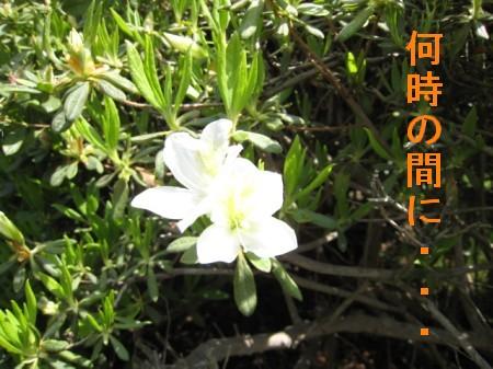 080328の映像大村公園 052-jkjk