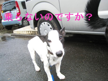080409狂犬病 014-ttt