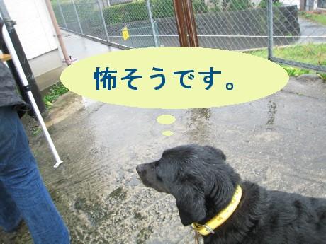 080409狂犬病 038-ttt