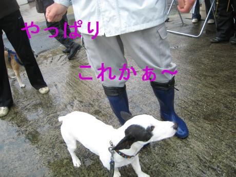 080409狂犬病 037-ttt