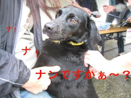 080409狂犬病 041-ttt
