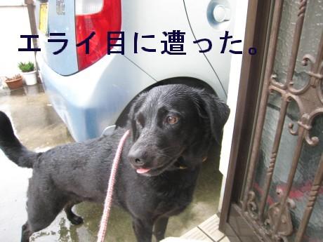 080409狂犬病 043-ttt