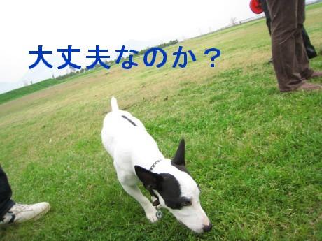 080413 ウイペットOF会 470-poo