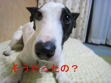080419のsozai 001-hggg