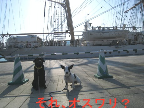 080424帆船祭り 088ddf