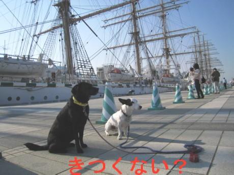 080424帆船祭り 081ddf
