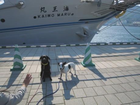 080424帆船祭り 100ddf