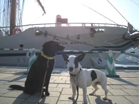 080424帆船祭り 137ddf