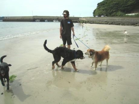 080506松浦の海 124o