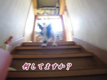 080725の映像 079_u400