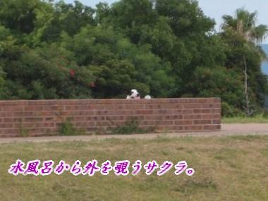 080809の映像 015_u400