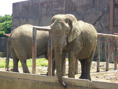 東武動物公園♪