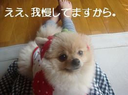 ぷーちゃん 235