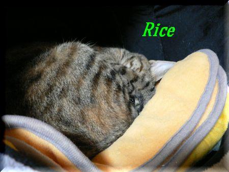 rice61