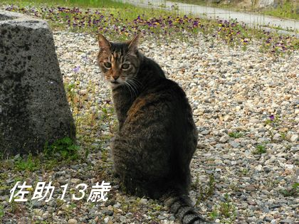 sasuke45.jpg