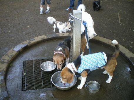 水分補給もだいじね。