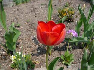 20080427-4.jpg