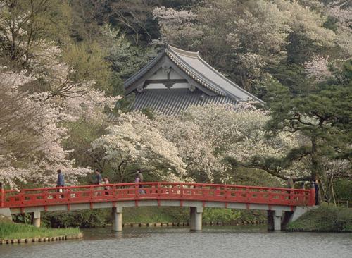 2008.桜風景
