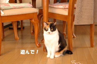 20080317mikan.jpg