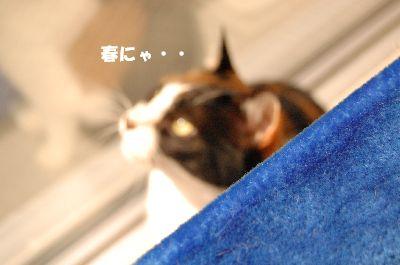 20080318mikan.jpg