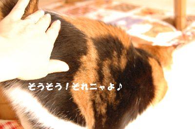 20080324mikan4.jpg