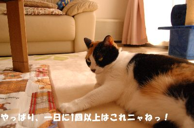 20080324mikan5.jpg