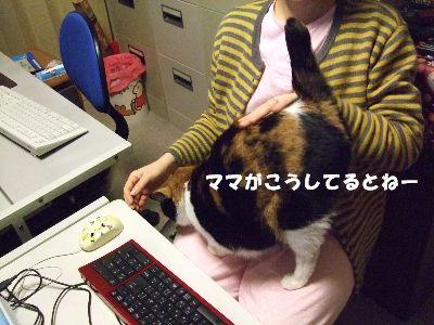 20080404mikan6.jpg