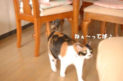 20080407mikan3.jpg