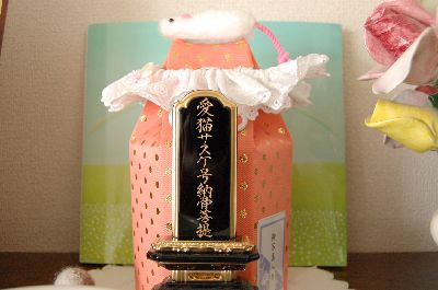 20080411sasuke2.jpg