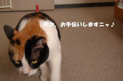 20080414mikan7.jpg