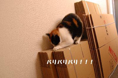 20080415mikan5.jpg
