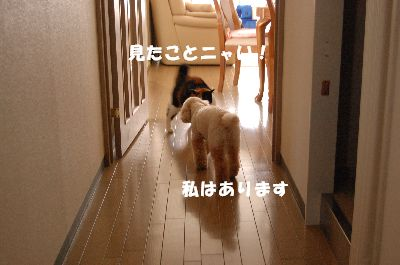 20080420mikan3.jpg