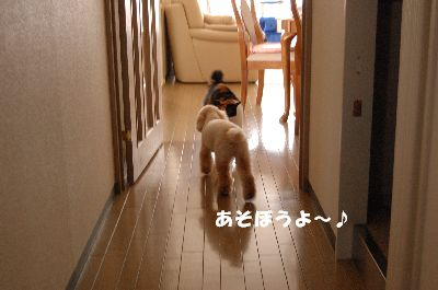 20080420mikan4.jpg