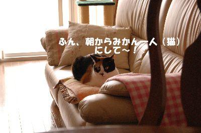 20080528mikan.jpg