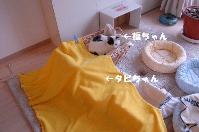 20080530福タビ