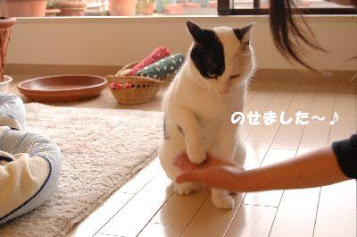 20080530福4